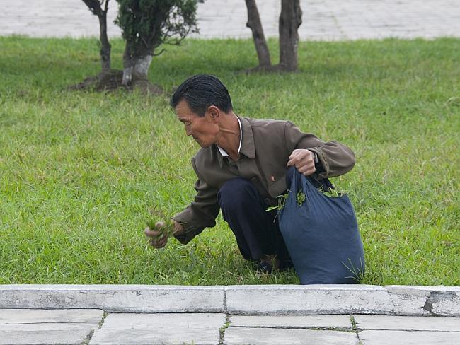 Kuzey Kore'nin en nefret ettiği görüntü. Yemek için sokaktan ot toplayan insanlar